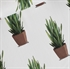Picture of Sansevieria - French Terry - Blanc Cassé